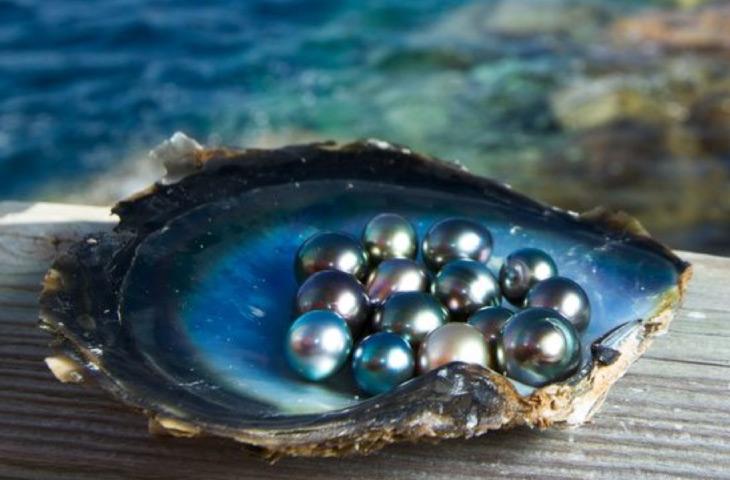 Tahitian pearls image
